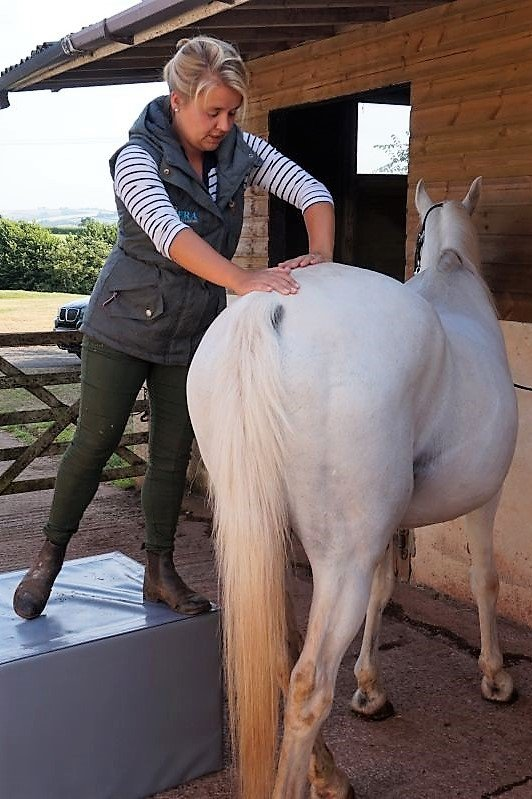 Equine Chiropractor working in Torbay