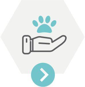 Animal Chiropractic South Devon Icon
